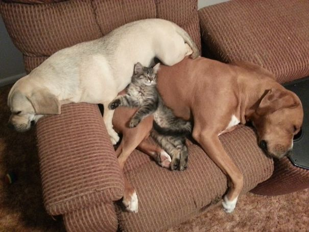 cat_dog_friends