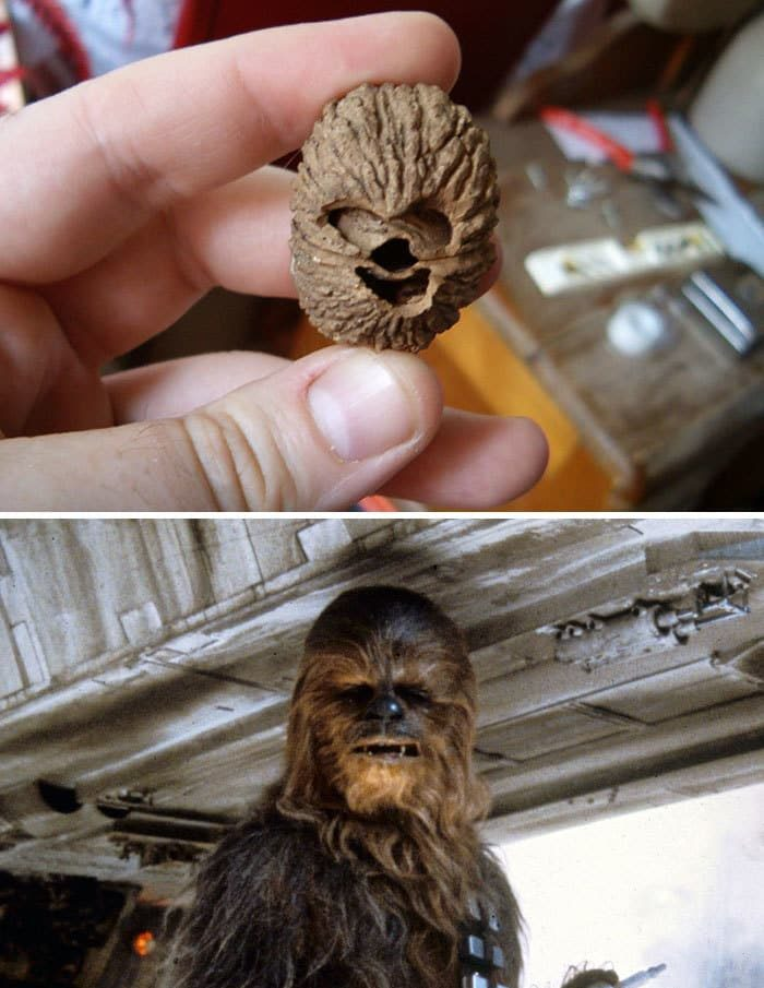 chewbacca_walnut